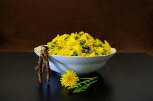 タンポポの花と根